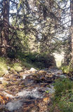 有结构树的河 图库摄影