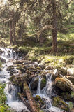 有结构树的河 免版税库存照片