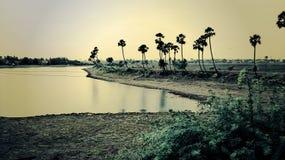 有结构树的湖 免版税图库摄影