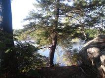 有结构树的湖 库存图片