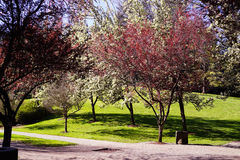有结构树的路 免版税库存图片