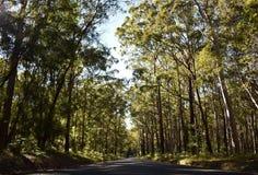 有结构树的路 免版税图库摄影