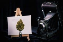 有画架和葡萄酒照相机的大麻芽 免版税库存图片