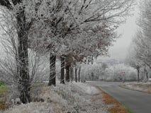 有冻树的冬天街道 免版税图库摄影