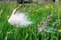 有绒毛的两棵植物 免版税库存图片
