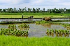 有水牛城的泰国农夫 免版税图库摄影