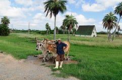 有黄牛的农夫 免版税库存照片