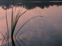 有水生植物剪影的湖 免版税库存照片