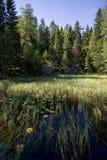 有水生植物的湖 库存图片