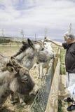 有驴的人 免版税图库摄影