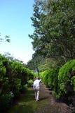 有他的伞的一名修士走在路的在树之间 库存图片
