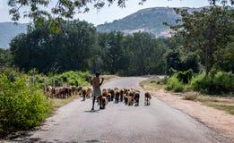 有他的山羊和绵羊的在Horsley小山,安得拉邦一位牧羊人 免版税图库摄影
