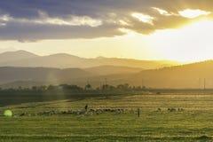 有他的山羊的山羊牧民在日落的山 免版税库存照片
