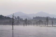 有死的树的湖 免版税库存照片