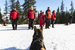 有他们的狗的红十字救主 图库摄影
