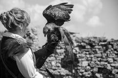 有他的猎鹰的年轻俏丽的以鹰狩猎者,用于猎鹰训练术, 免版税图库摄影