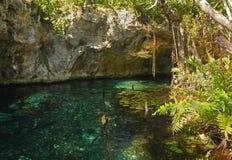 有洞的美丽如画的自然地下湖在墨西哥 免版税库存照片