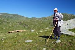 有他的群的老牧羊人在牧场地 库存图片