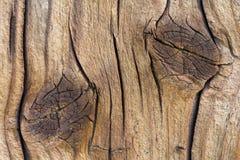 有结的老木板 库存照片