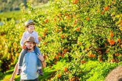 有他的年轻儿子的愉快的父亲获得在柑橘的乐趣 免版税库存照片