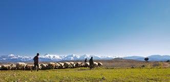 有他们的绵羊牧群的牧羊人 库存图片
