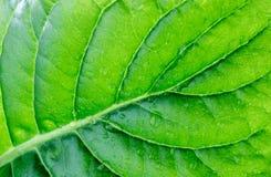 有水纹理背景宏指令下落的绿色叶子  库存图片