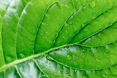 有水纹理背景宏指令下落的绿色叶子  免版税图库摄影