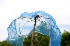 有滤网的老伞 库存图片