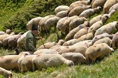 有绵羊的牧羊人 免版税图库摄影