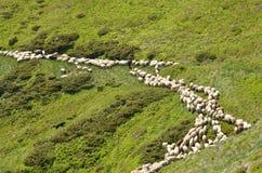 有绵羊的牧羊人 库存照片