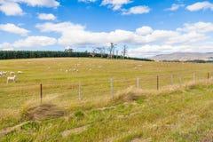 有绵羊的美丽的健康小牧场 图库摄影