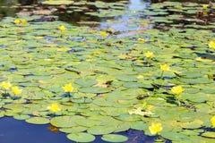 有绿色叶子的湖 库存照片