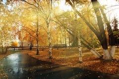 有黄色叶子的秋天公园,夏天 库存图片