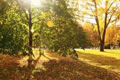 有黄色叶子的秋天公园,小阳春 免版税库存图片