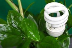 有绿色叶子的, ECO能量概念,关闭LED灯 在背景的电灯泡 保存和生态环境 复制空间 免版税库存图片