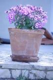 有紫色和白花的植物罐 免版税库存照片