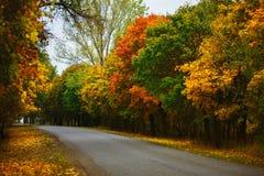 有绿色和黄色树的一条老路 免版税库存图片