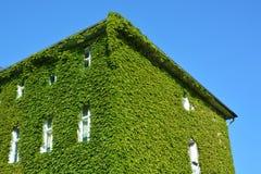 有绿色墙壁的议院 免版税库存照片