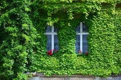有绿色墙壁的议院 库存照片