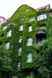 有绿色墙壁的议院 库存图片