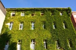 有绿色墙壁的都市议院 免版税库存照片