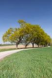 有绿色大道的乡下公路 图库摄影