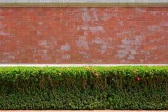 有绿色布什的红砖墙壁 库存图片