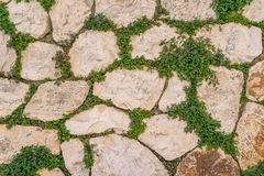 有绿色常春藤叶子的年迈的石砖墙在马泰拉,意大利使用 免版税库存图片