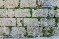 有绿色常春藤叶子纹理的在马泰拉, Ita年迈的石砖墙 免版税库存图片