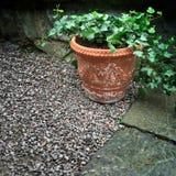 有绿色常春藤的泥罐 库存图片