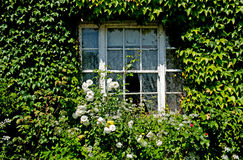 有绿色常春藤的窗口盖子 库存照片
