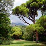 有绿色树和山的公园 免版税库存图片
