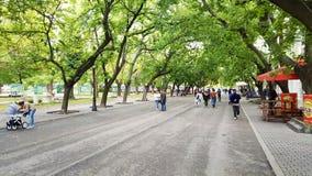 有绿色树的大街在旧扎戈拉 库存图片