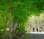 有绿色树的日本庭院在夏天 免版税库存图片